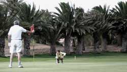 Friends playing golf in Costa Teguise, Lanzarote