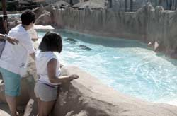 Mother and daughter observing the sea lions of the Rancho Texas, Puerto del Carmen, Lanzarote, Children's Areas